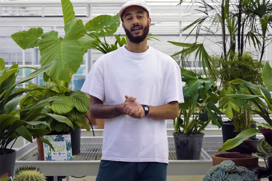 Watch our video series, Houseplant 101, and learn about the fundamentals of caring for your houseplants