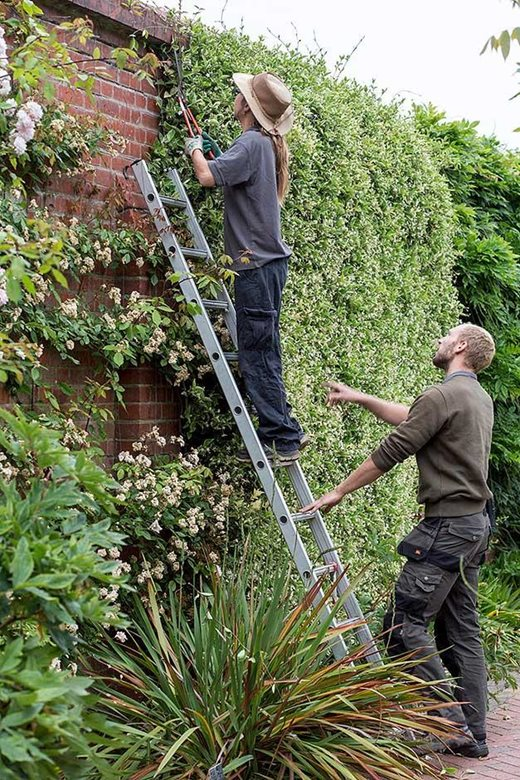 pruning on ladder