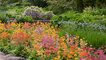 Visit Harlow Carr in summer
