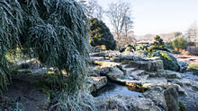 Visit Wisley in winter