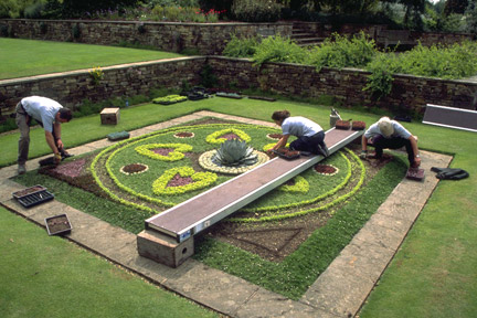 Gardeners planting out carpet bedding at RHS Garden Wisley in late May.