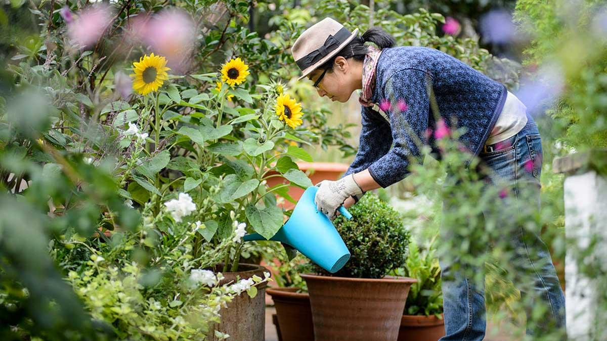 watering containers in the garden