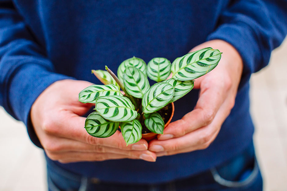 Everything you need to know about growing houseplants