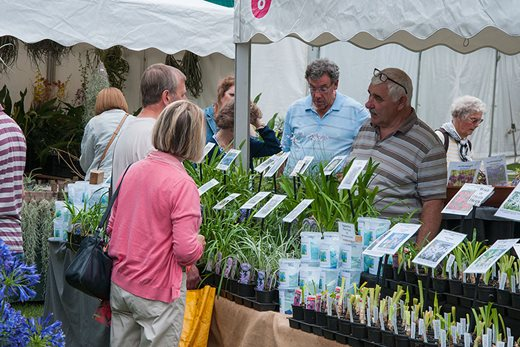 Buying agapanthus at the Wisley Flower Show