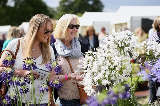 Women looking at agapanthus